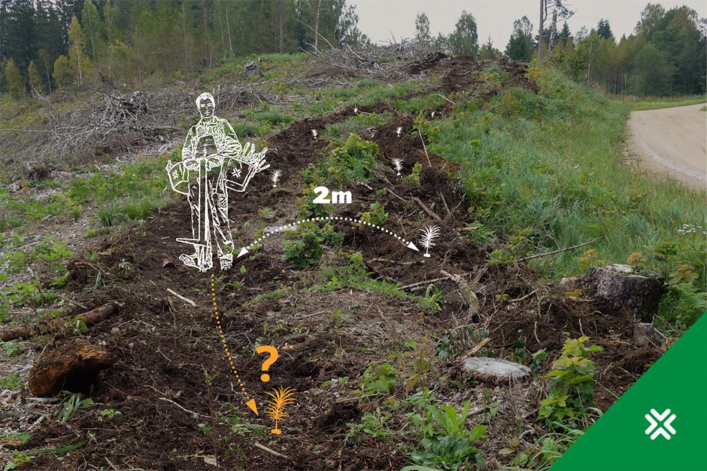 Metsataimede istutamine. Kui tihedalt peab taimi istutama. Metsaühistu