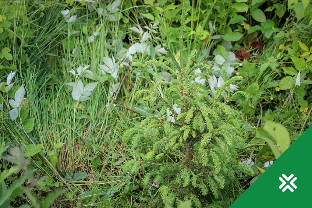 Metstaimed vajavad suvel hooldust. Metsaühistu